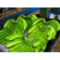 The Cavendish banana is the most consumed worldwide